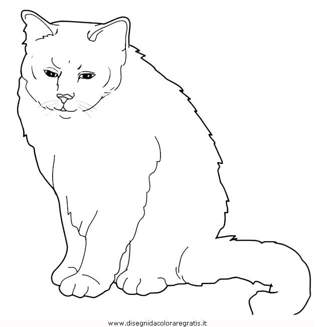 animali/gatti/Birman.JPG