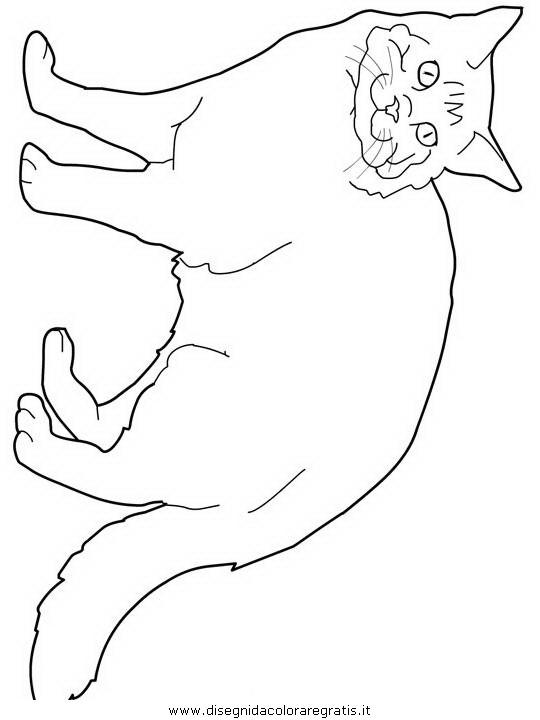 animali/gatti/Maine-Coon.JPG