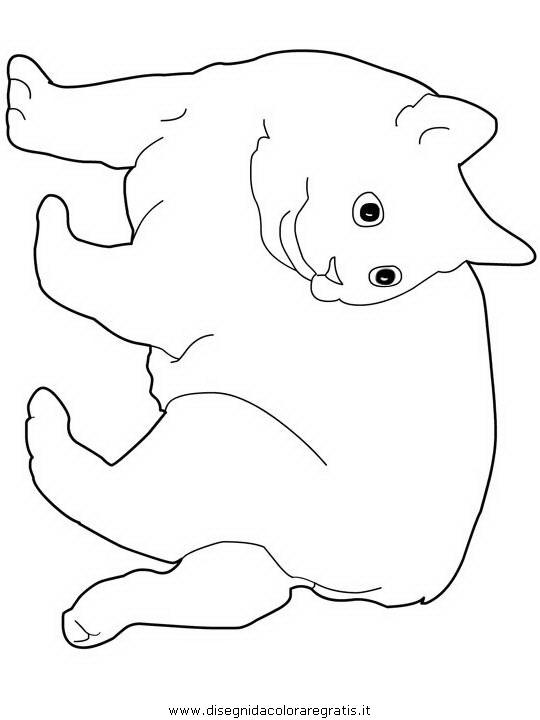 animali/gatti/Manx.JPG