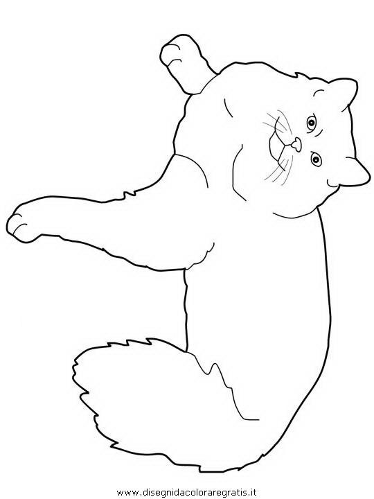 animali/gatti/Ragdoll.JPG