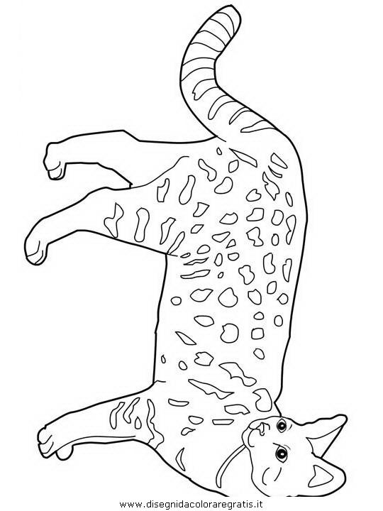 animali/gatti/Savannah.JPG