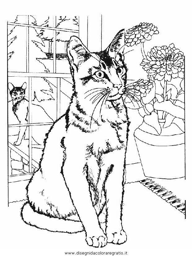 animali/gatti/gatto_002.JPG