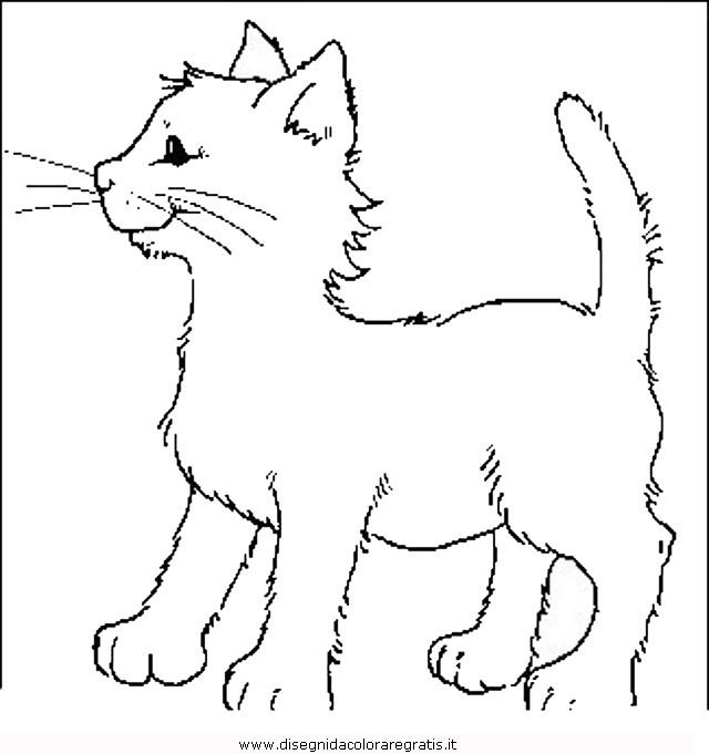 animali/gatti/gatto_012.JPG