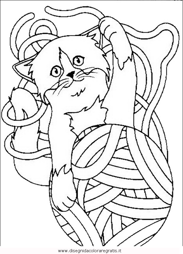 animali/gatti/gatto_020.JPG