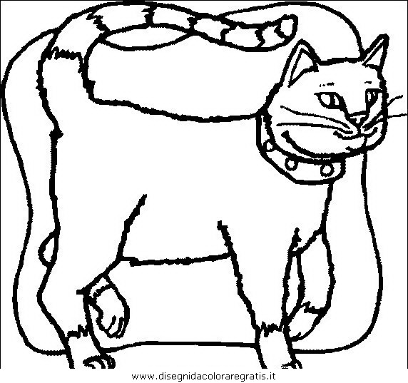 animali/gatti/gatto_022.JPG