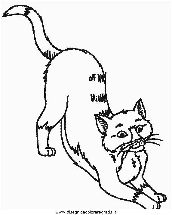 animali/gatti/gatto_033.JPG