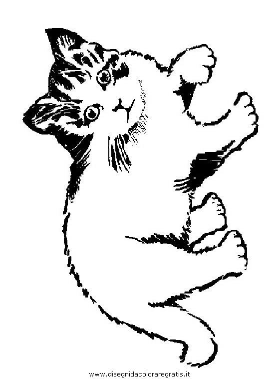 animali/gatti/gatto_050.JPG