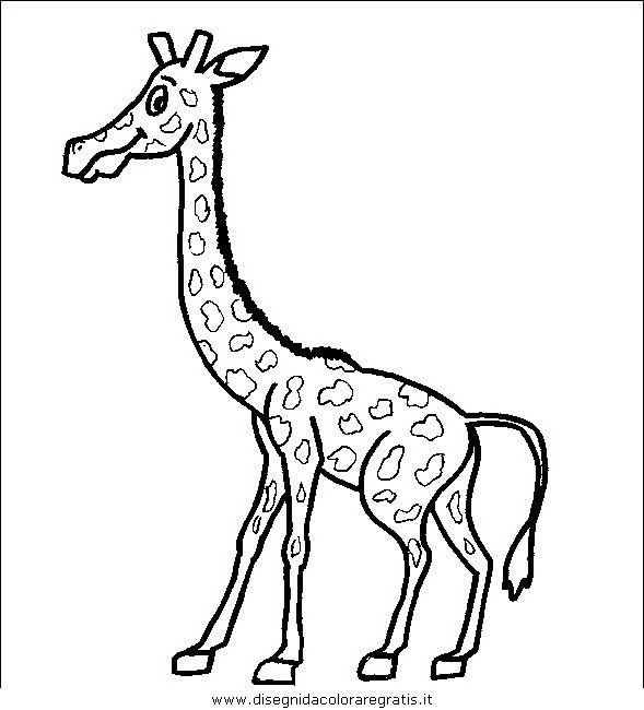 animali/giraffe/giraffa_08.JPG