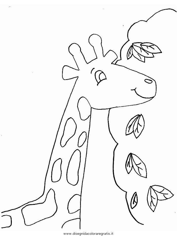 animali/giraffe/giraffa_18.JPG