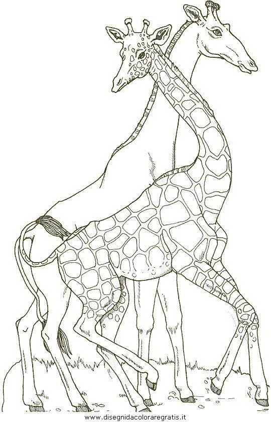 animali/giraffe/giraffa_19.jpg