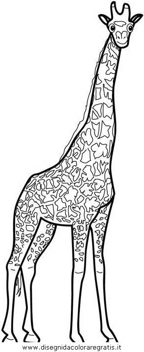 animali/giraffe/giraffa_20.JPG