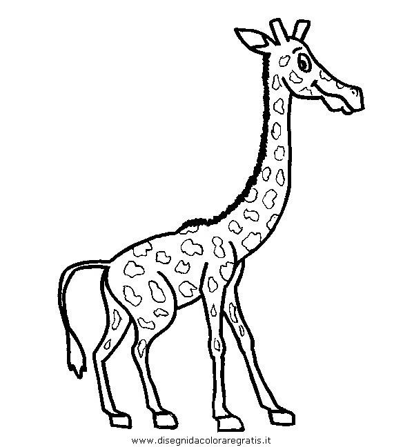 animali/giraffe/giraffa_29.JPG