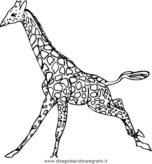 animali/giraffe/giraffa_34.JPG