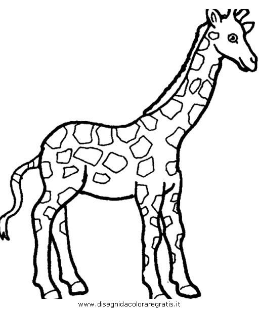 animali/giraffe/giraffa_38.JPG