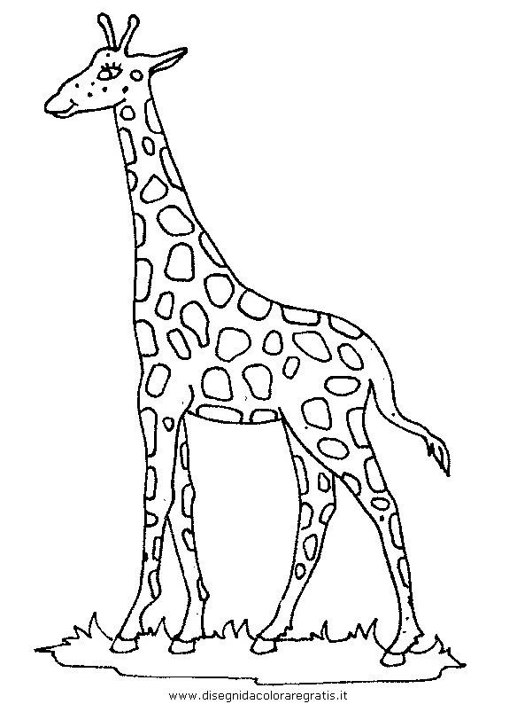 Disegno Giraffa 46 Animali Da Colorare