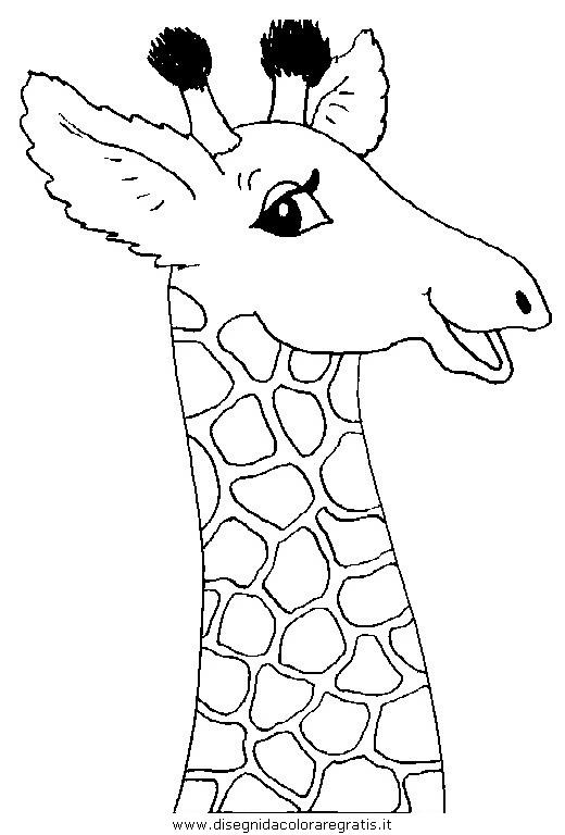 animali/giraffe/giraffa_48.JPG