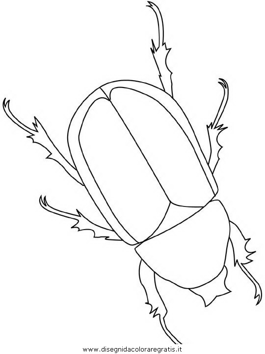 animali/insetti/beetle.JPG