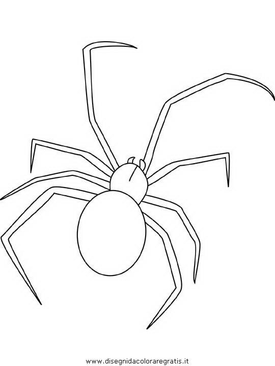 animali/insetti/black-widow-spider.JPG