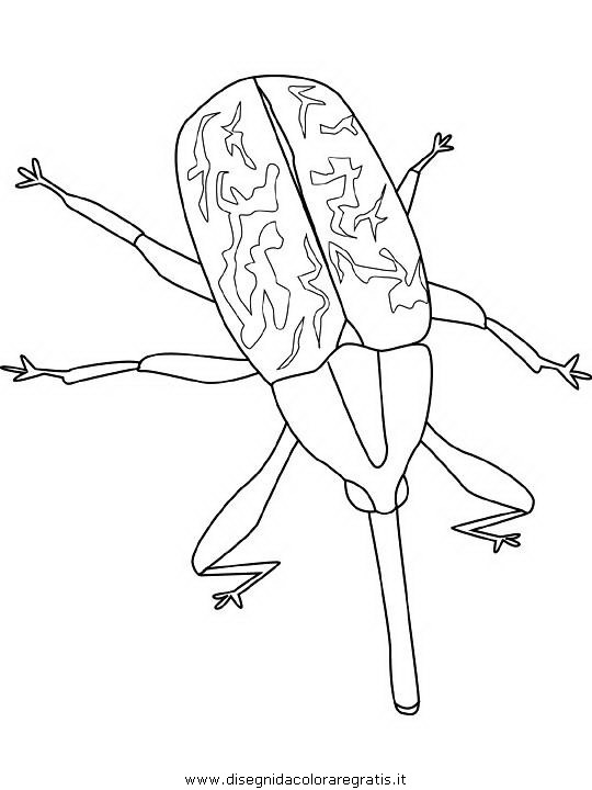 animali/insetti/boll-weevil.JPG