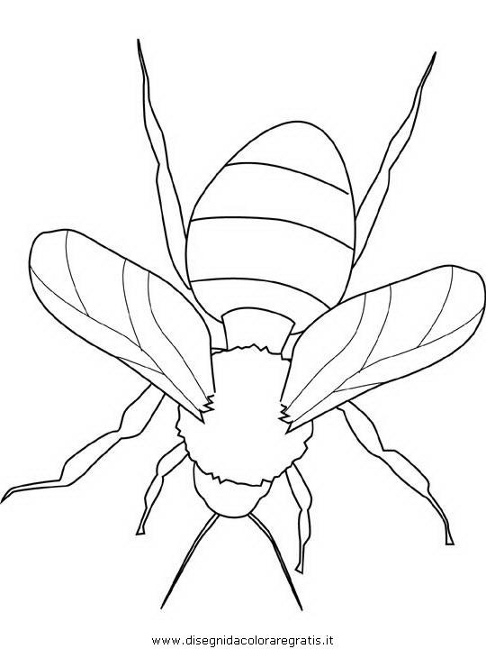 animali/insetti/bumblebee.JPG