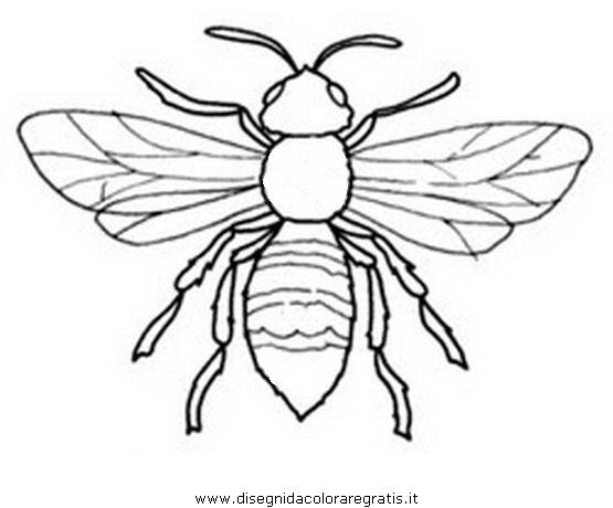 animali/insetti/calabrone_1.JPG