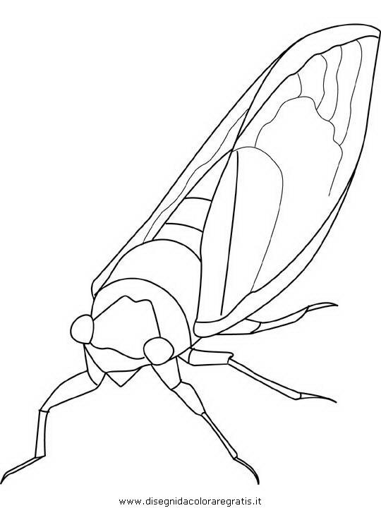 animali/insetti/cicada.JPG
