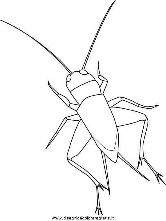 animali/insetti/cricket.JPG