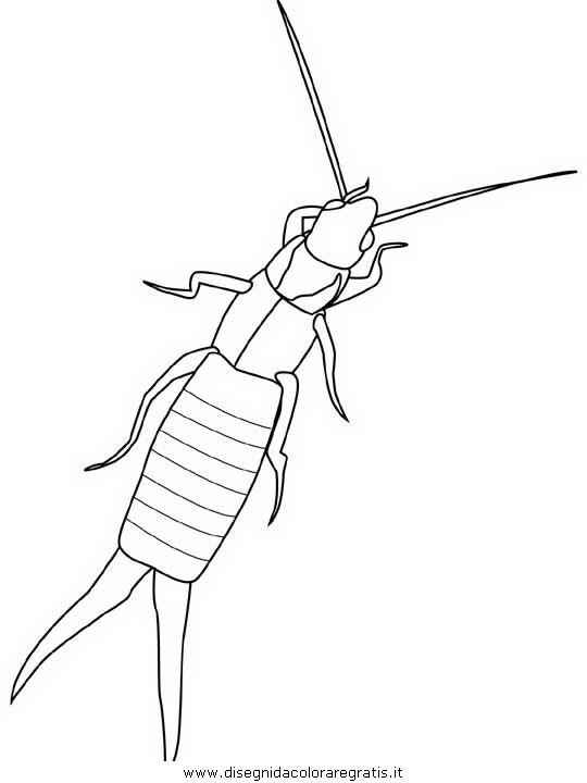 animali/insetti/earwig.JPG