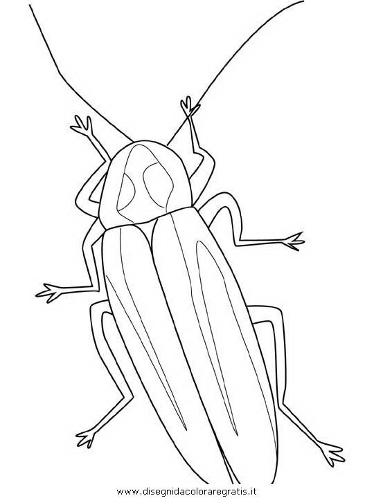 animali/insetti/firefly.JPG