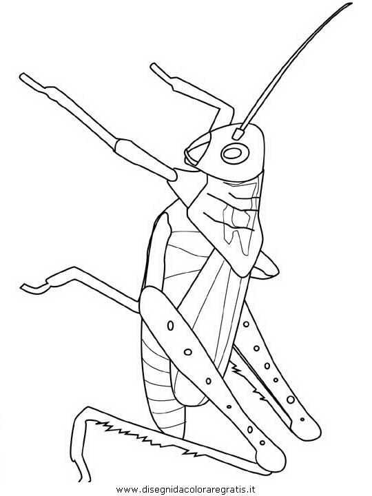 animali/insetti/grasshopper.JPG