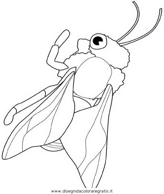 animali/insetti/honeybee.JPG