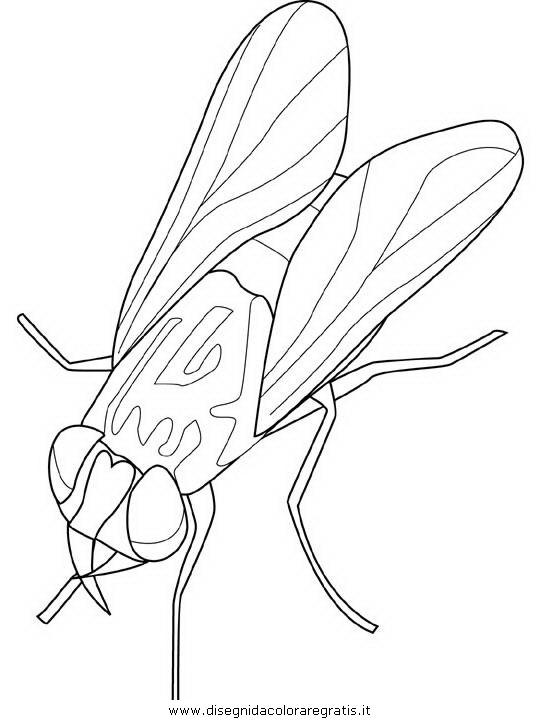 animali/insetti/housefly.JPG