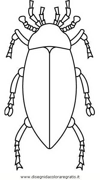 animali/insetti/insetto_100.JPG
