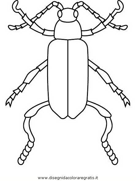 animali/insetti/insetto_101.JPG