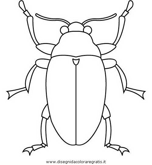 animali/insetti/insetto_102.JPG
