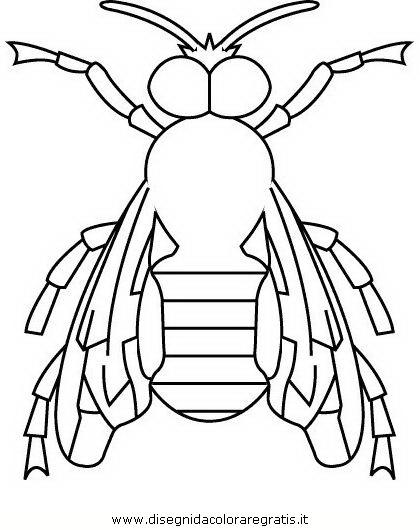 animali/insetti/insetto_103.JPG