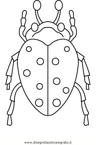 animali/insetti/insetto_104.JPG