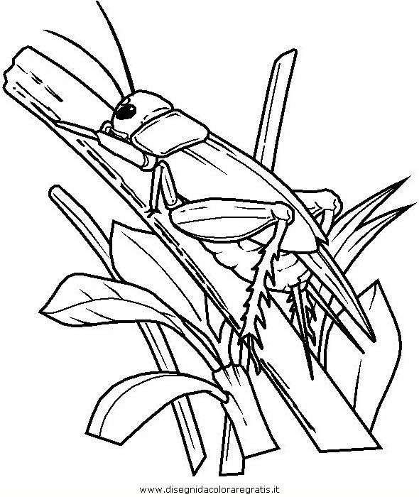 animali/insetti/insetto_106.JPG