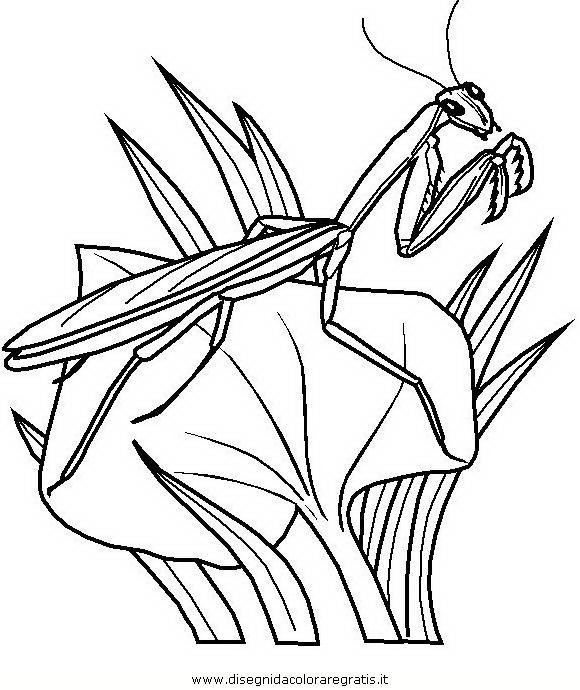 animali/insetti/insetto_107.JPG