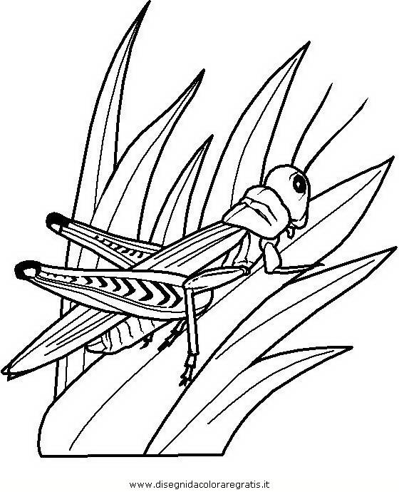 animali/insetti/insetto_108.JPG