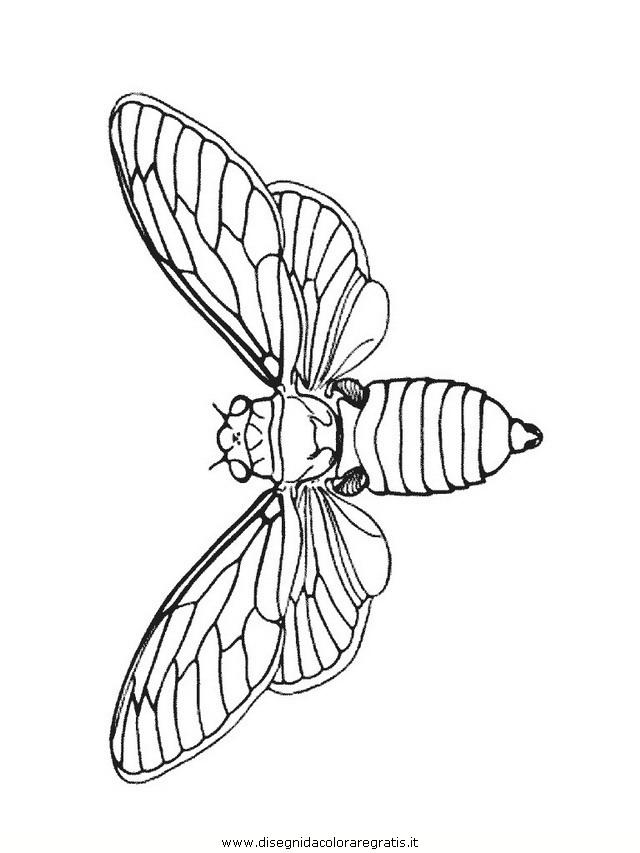 animali/insetti/insetto_112.JPG