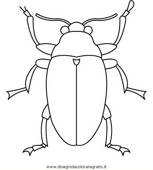 animali/insetti/insetto_115.JPG