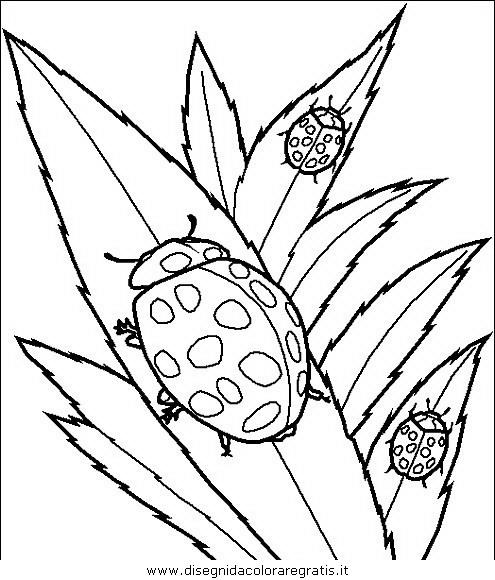 animali/insetti/insetto_36.JPG