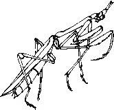 animali/insetti/insetto_82.JPG