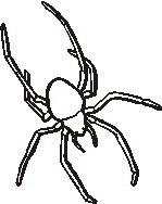 animali/insetti/insetto_84.JPG
