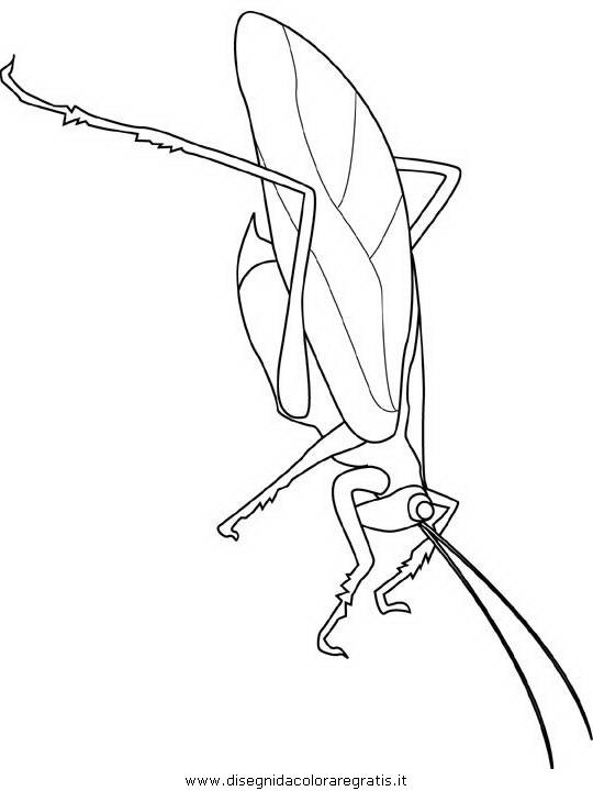 animali/insetti/katydid.JPG