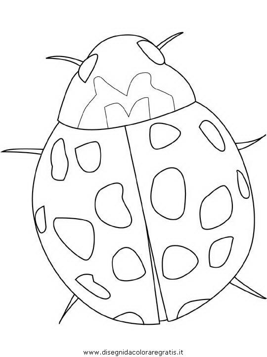 animali/insetti/ladybug.JPG