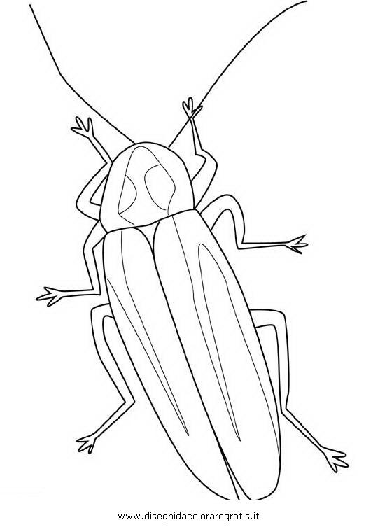 animali/insetti/lucciola_lucciole_03.JPG