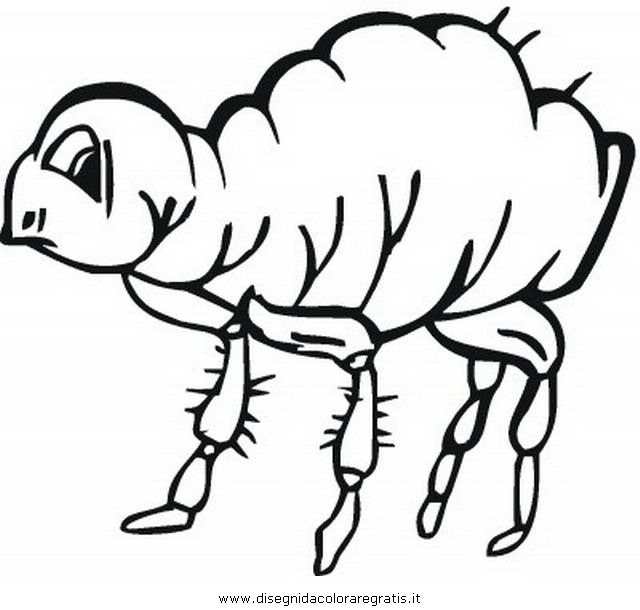 animali/insetti/pulce_pidocchio_1.JPG