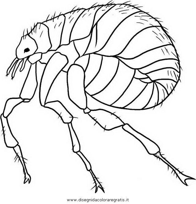 animali/insetti/pulce_pidocchio_4.JPG